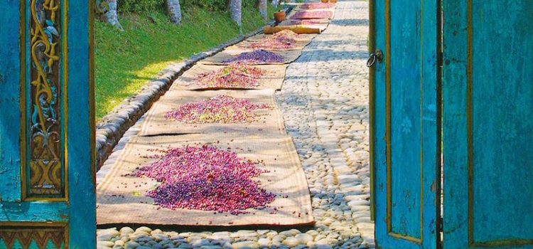 mesastila-18-drying-coffee