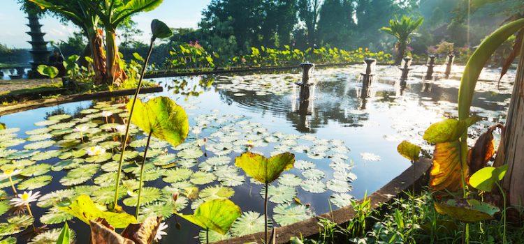 bali-fleurs-lotus-voyagesurmesure