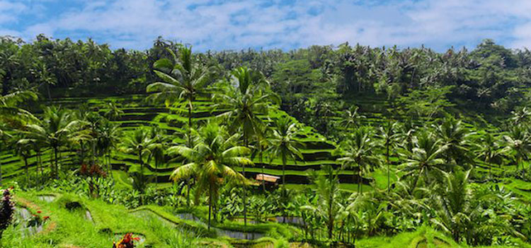 bali-ubud-rizieres-voyagesurmesure-unmondeapart